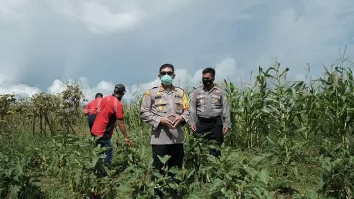 Kapolres Sorong Tinjau Lokasi Kesiapan Ketahanan Pangan Polres Sorong di Aimas 1 IMG 20200617 WA0031