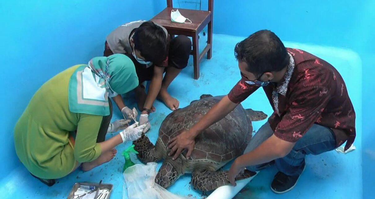 Petugas Amankan Penyu Sisik Dari Seorang Warga di Kawasan Tanjung 1 IMG 20210501 WA0037 1