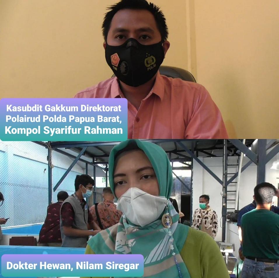 Petugas Amankan Penyu Sisik Dari Seorang Warga di Kawasan Tanjung 4 IMG 20210501 2
