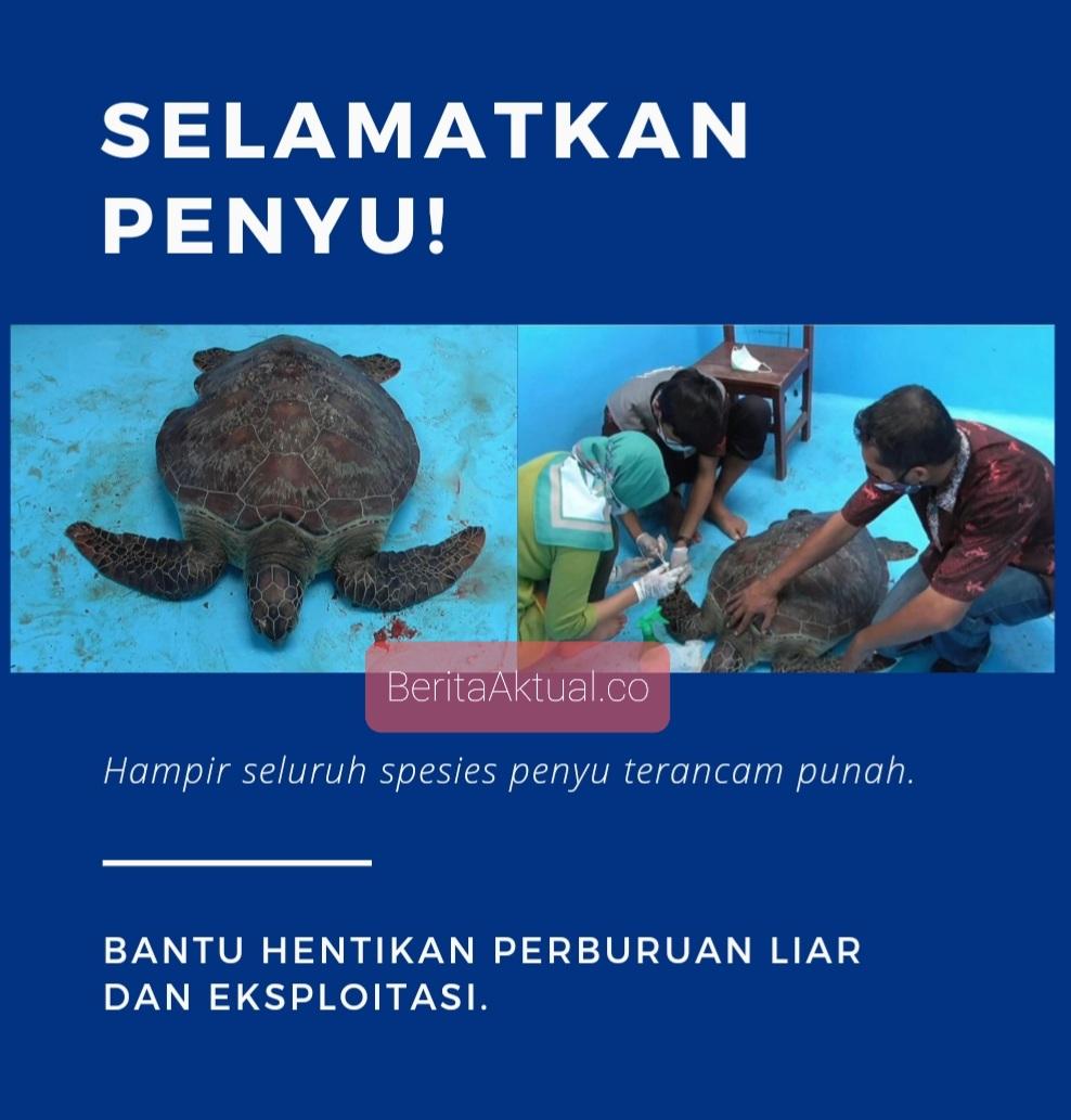 Petugas Amankan Penyu Sisik Dari Seorang Warga di Kawasan Tanjung 5 Screenshot 20210501 231559 Canva 2