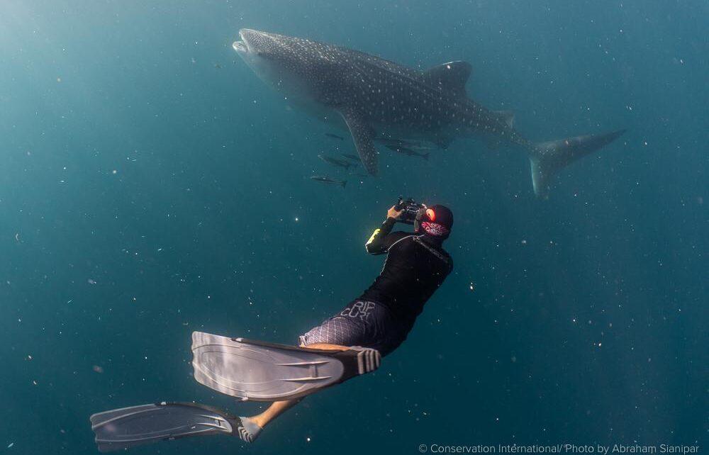 Balai Besar Taman Nasional Teluk Cenderawasih Dan CI Bangun Basis Data Populasi Hiu Paus 6 IMG 20210615 WA0042