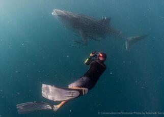 Balai Besar Taman Nasional Teluk Cenderawasih Dan CI Bangun Basis Data Populasi Hiu Paus 14 IMG 20210615 WA0042