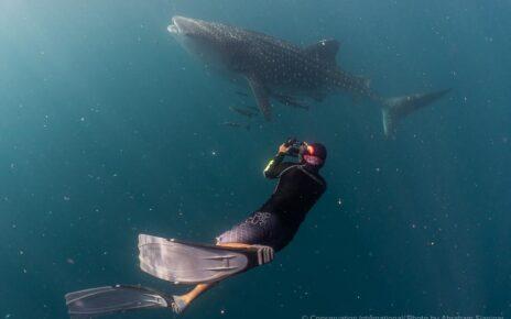Balai Besar Taman Nasional Teluk Cenderawasih Dan CI Bangun Basis Data Populasi Hiu Paus 4 IMG 20210615 WA0042