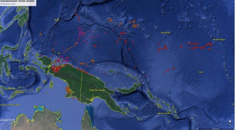 Balai Besar Taman Nasional Teluk Cenderawasih Dan CI Bangun Basis Data Populasi Hiu Paus 4 Screenshot 20210616 122419 Docs
