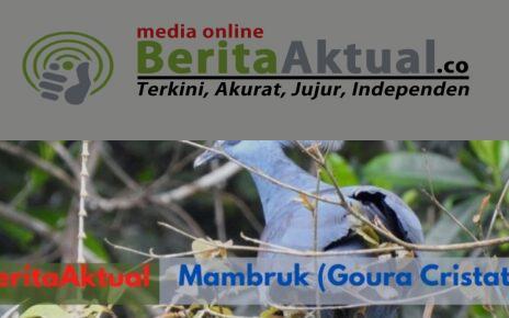 Jaga Alam, BBKSDA Gandeng Koarmada 3 Dan Stakeholder Lepas 37 Satwa Endemik di Hutan Katapop 4 Screenshot 20210929 233951 Canva