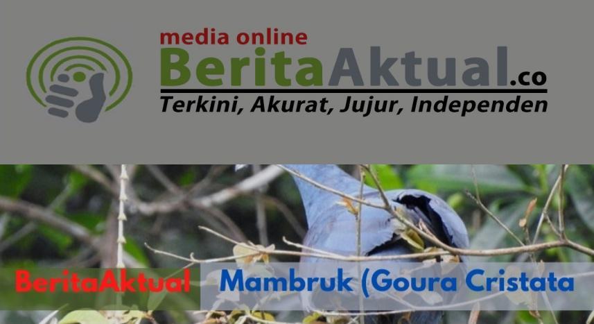 Jaga Alam, BBKSDA Gandeng Koarmada 3 Dan Stakeholder Lepas 37 Satwa Endemik di Hutan Katapop 1 Screenshot 20210929 233951 Canva