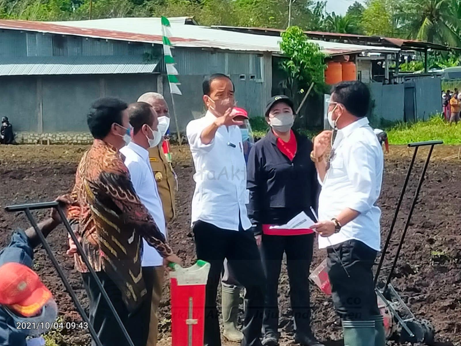Jokowi Ingin Papua Barat Jadi Produsen Pertanian Indonesia Timur 4 IMG 20211004 WA0006