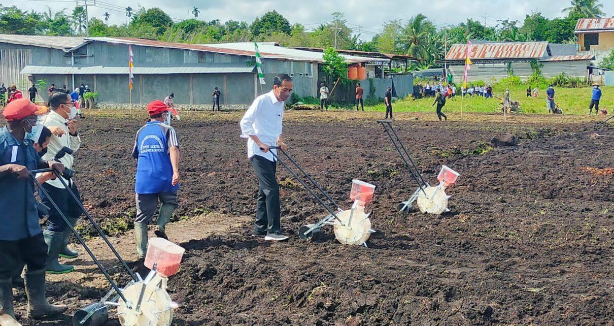 Jokowi Ingin Papua Barat Jadi Produsen Pertanian Indonesia Timur 1 IMG 20211004 WA0007