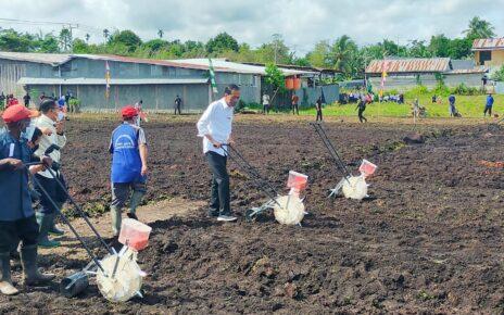 Jokowi Ingin Papua Barat Jadi Produsen Pertanian Indonesia Timur 10 IMG 20211004 WA0007